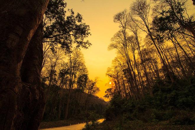 Ngắm rừng săng lẻ nguyên sinh đẹp như tranh giữa đại ngàn xứ Nghệ - 6