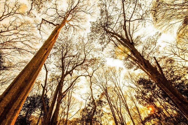 Ngắm rừng săng lẻ nguyên sinh đẹp như tranh giữa đại ngàn xứ Nghệ - 3