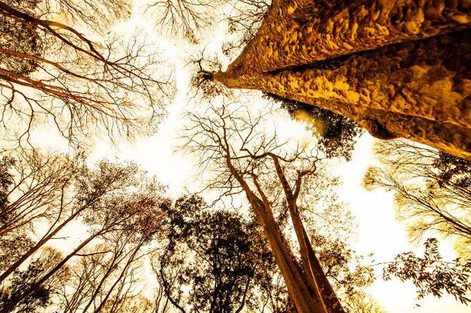 Ngắm rừng săng lẻ nguyên sinh đẹp như tranh giữa đại ngàn xứ Nghệ - 4