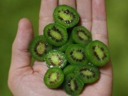 Thị trường - Tiêu dùng - Soi trái kiwi bé như quả nho giá cả triệu đồng/kg, chị em tranh mua