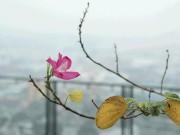 Tin tức trong ngày - Hiện tượng thời tiết khiến Sài Gòn như hóa Sa Pa