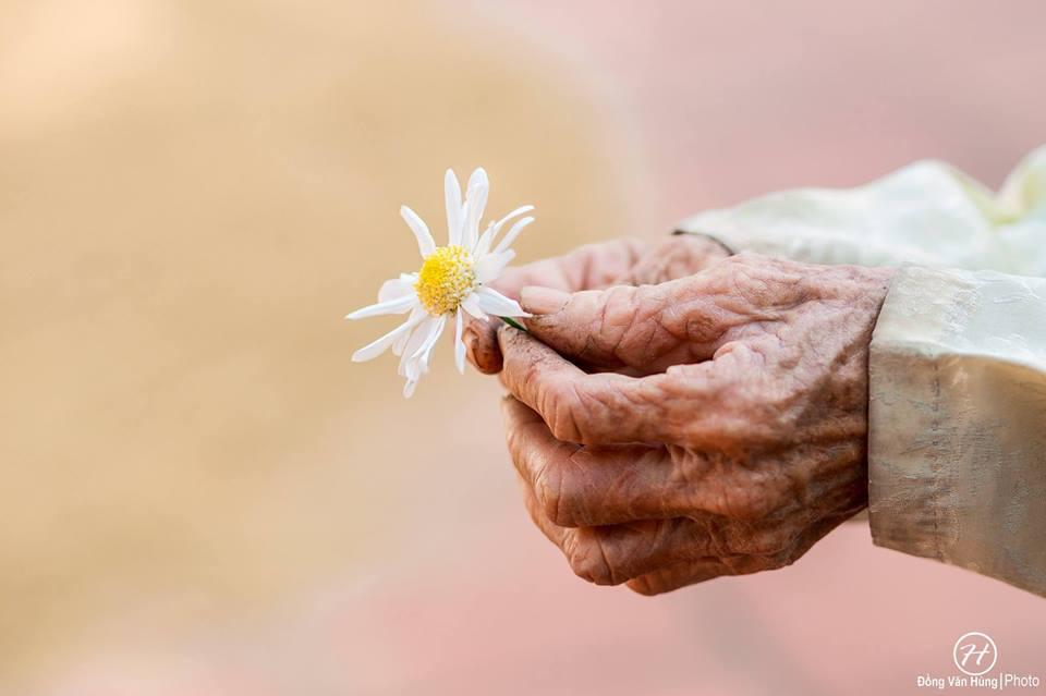 Ảnh cụ bà 99 tuổi bên cúc họa mi đẹp ngất ngây khiến dân mạng chao đảo - 2