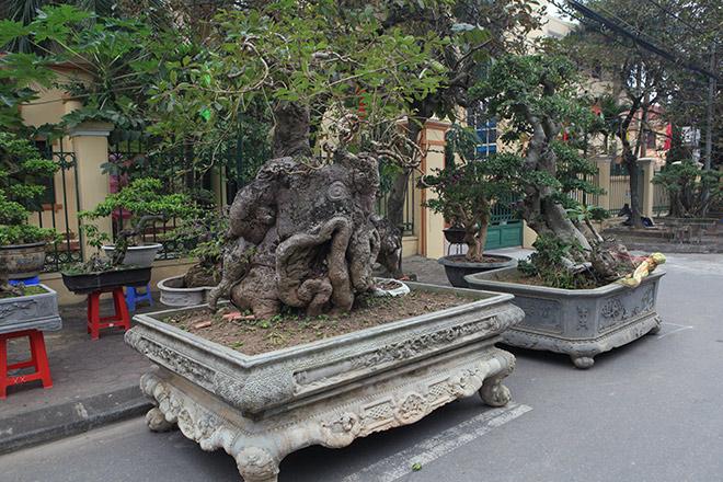 """""""Kỳ hoa dị thảo"""" dồn dập đổ về Hà Nội, dân chơi cây cảnh phát sốt"""
