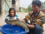 Thị trường - Tiêu dùng - Nuôi con gì bán Tết: Kiếm trăm triệu nhờ nuôi loài cá lóc đầu nhọn