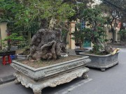 """Tin tức trong ngày - """"Kỳ hoa dị thảo"""" dồn dập đổ về Hà Nội, dân chơi cây cảnh phát sốt"""