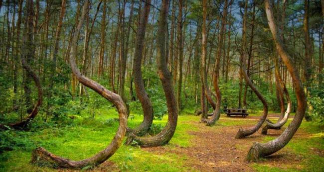 Những bí ẩn rợn người trong khu rừng ma ám đáng sợ nhất thế giới