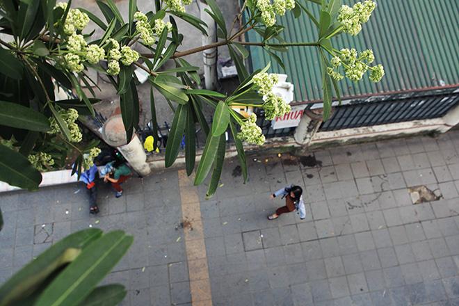 """""""Thủ phạm"""" khiến người Hà Nội ám ảnh về đêm - 7"""