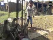 Phi thường - kỳ quặc - Cậu bé sống với bầy khỉ hoang dã như anh em một nhà