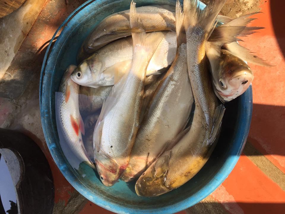 """Bà bầu gây """"sốc"""" với mâm cơm đầy đủ tôm, cá giá chỉ... 5.000 đồng - 8"""