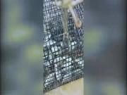Phi thường - kỳ quặc - Video: Bạch tuộc thông minh thò vòi vào bẫy trộm cá của ngư dân