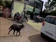 Rùng mình cảnh chó ngậm em bé trong mồm chạy trên đường Ấn Độ