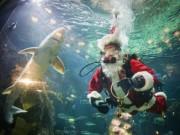 Thị trường - Tiêu dùng - Canada: Hút khách bằng ông già Noel trong bể cá