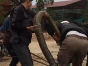"""Tin tức trong ngày - Người dân vây bắt rắn """"khủng"""" nặng gần 20kg ở Vĩnh Phúc"""