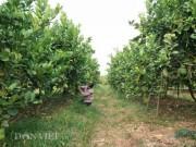 Thị trường - Tiêu dùng - Trồng cây gì bán Tết: Chăm cây dại, dân Thủ đô bất ngờ kiếm cả tỷ đồng
