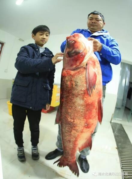 """TQ: Bắt được cá mè vua """"thành tinh"""", lớn nhất trong 50 năm - 4"""