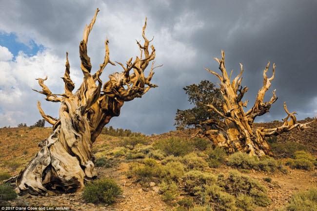 Ngỡ ngàng trước những cây cổ thụ kỳ dị nhất hành tinh - 1