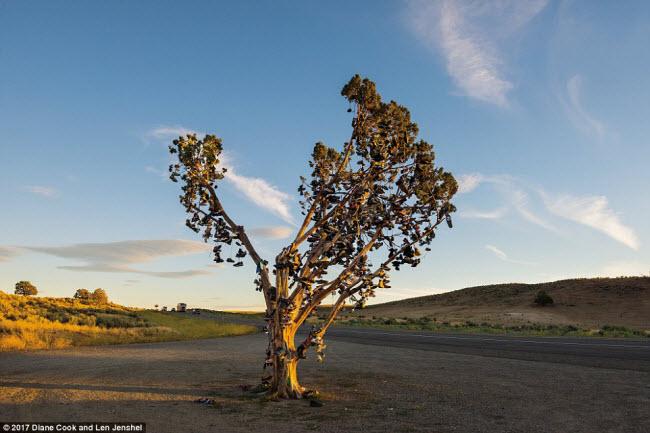 Ngỡ ngàng trước những cây cổ thụ kỳ dị nhất hành tinh - 4