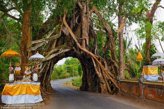 Ngỡ ngàng trước những cây cổ thụ kỳ dị nhất hành tinh - 9