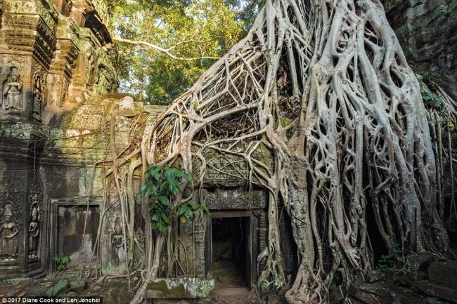 Ngỡ ngàng trước những cây cổ thụ kỳ dị nhất hành tinh - 8