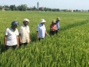 """Thị trường - Tiêu dùng - Triết lý """"6 cây 2 con"""" ở Quảng Trị: Trồng lúa sạch, dược liệu giá cao"""