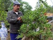 Thị trường - Tiêu dùng - Nghề HOT: Trồng quất bonsai, bán giá cao hơn quất cảnh 10 lần