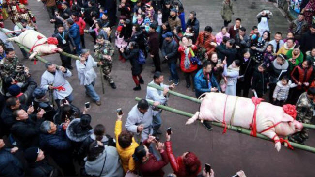Du khách đổ xô xem lễ tế lợn có