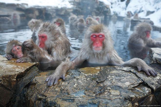 7 địa điểm đón mùa đông sẽ khiến bạn yêu Nhật Bản ngay lập tức - 8