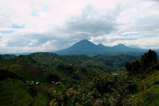 Dãy núi Virunga ở Uganda: Uganda là một địa điểm thiên nhiên tuyệt vời mang vẻ đẹp đặc trưng với hệ động vật hoang dã, đồi núi và cảnh quan hùng vĩ. Dãy núi Virunga ở Uganda nằm ở Kisoro và bao gồm dãy núi Sabinyo, Mhaginga và Muhabura.