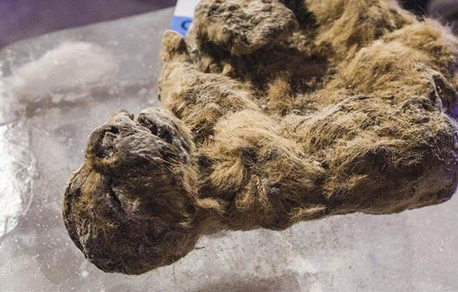 Những sinh vật đã tuyệt chủng trong Công viên kỷ Jura sắp được hồi sinh? - 2