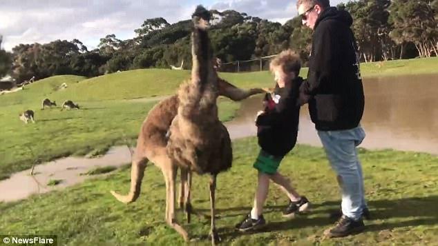 Đến gần cho kangaroo ăn, bé trai Úc không ngờ dính đòn nhớ đời - 1