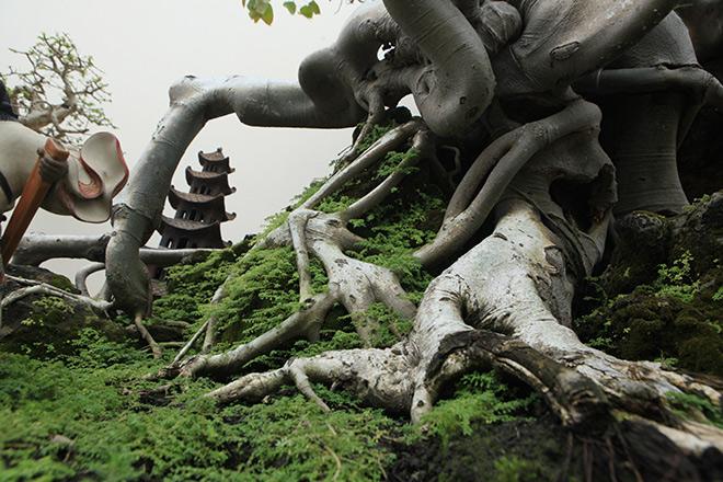 """Cây bồ đề có bộ rễ """"ảo diệu"""", có tiền thiếu duyên cũng không mua được - 6"""