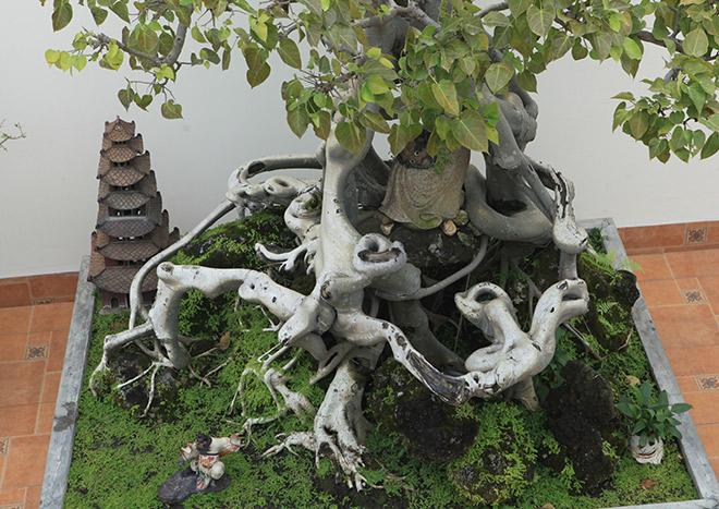 """Cây bồ đề có bộ rễ """"ảo diệu"""", có tiền thiếu duyên cũng không mua được - 3"""