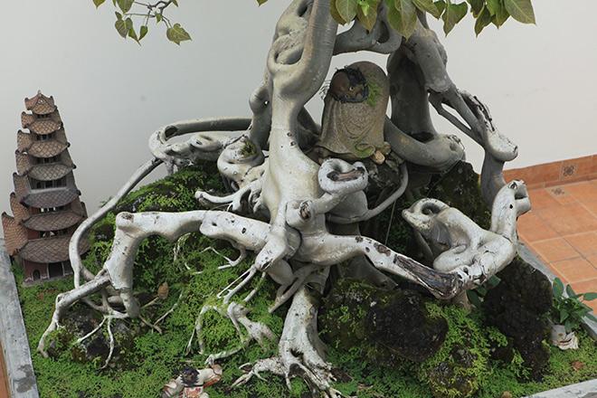 """Cây bồ đề có bộ rễ """"ảo diệu"""", có tiền thiếu duyên cũng không mua được - 10"""