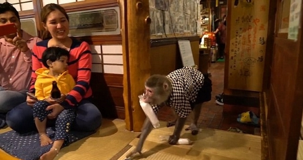 Thuê khỉ làm...bồi bàn, quán rượu ở Nhật Bản gây sốt - 2
