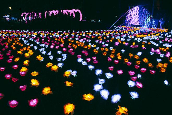 """9.999 đóa hồng bằng đèn led """"khoe sắc"""" tại sở thú ở Sài Gòn - 5"""