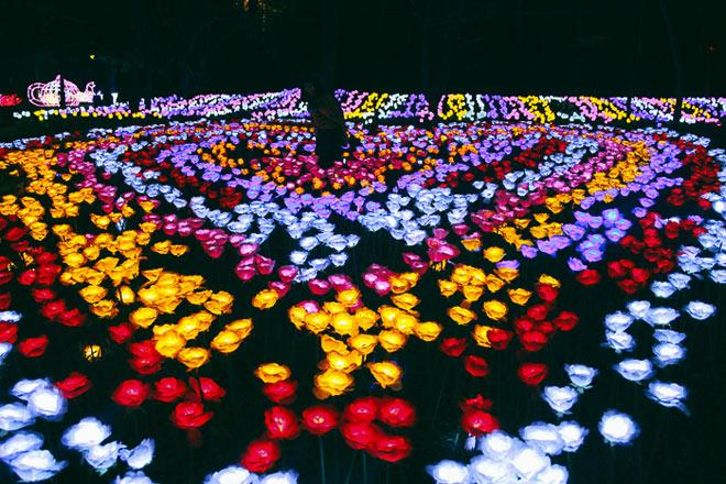 """9.999 đóa hồng bằng đèn led """"khoe sắc"""" tại sở thú ở Sài Gòn - 7"""
