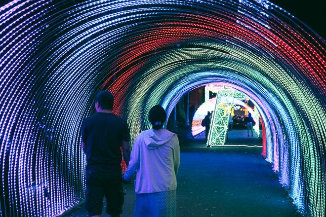 """9.999 đóa hồng bằng đèn led """"khoe sắc"""" tại sở thú ở Sài Gòn - 4"""