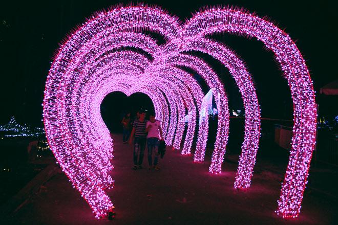 """9.999 đóa hồng bằng đèn led """"khoe sắc"""" tại sở thú ở Sài Gòn - 9"""