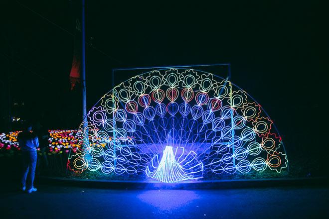 """9.999 đóa hồng bằng đèn led """"khoe sắc"""" tại sở thú ở Sài Gòn - 12"""
