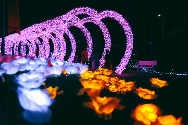 """9.999 đóa hồng bằng đèn led """"khoe sắc"""" tại sở thú ở Sài Gòn - 10"""