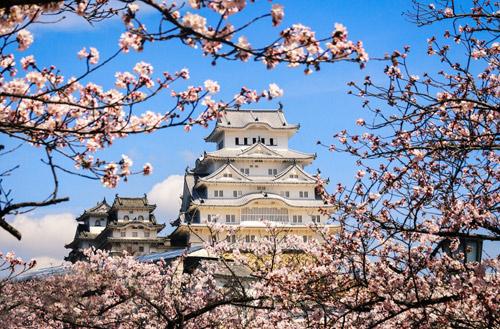 Nô nức mùa Lễ hội hoa anh đào Nhật Bản - 4