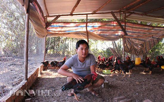 Nuôi gà thả vườn, chàng trai Lâm Đồng lãi 40 triệu đồng mỗi tháng