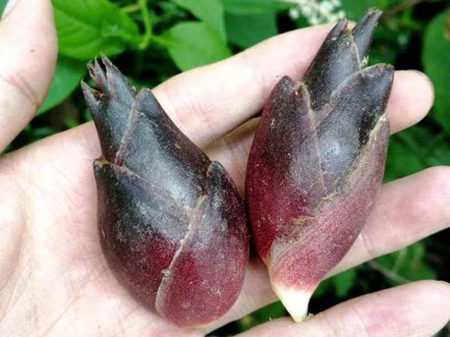 """Loại rau được người Nhật gọi là """"nhâm sâm châu Á"""" nhưng có giá rẻ như cho ở TQ"""