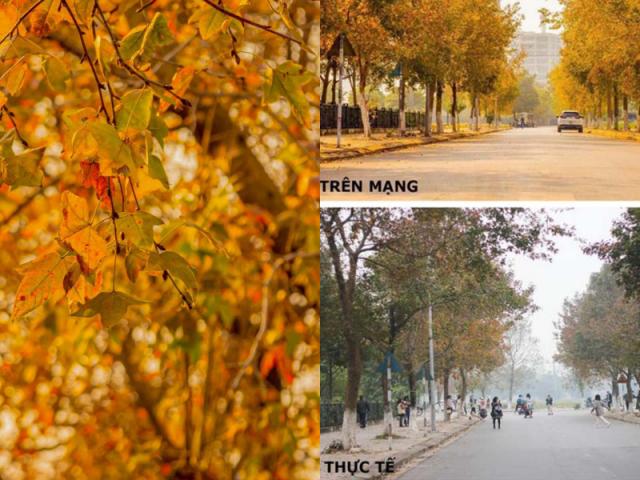 """Con đường lá phong đỏ được mệnh danh """"Seoul giữa lòng Hà Nội"""": Ảnh thực tế khác xa!"""