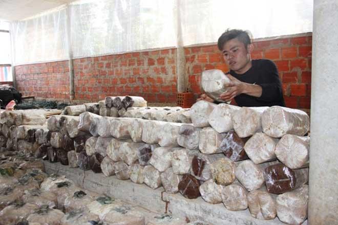 Trở về từ hoang mạc Israel, 9X trồng nấm sò kiếm 18 triệu/tháng - 1
