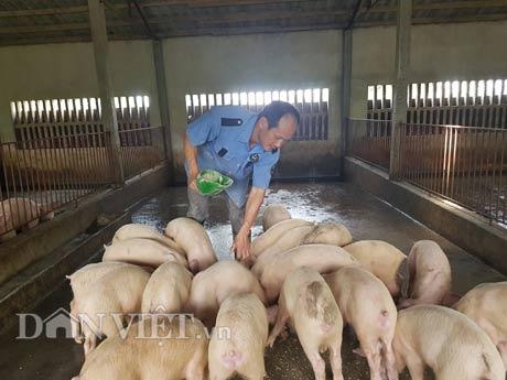 Kiếm tiền tỷ nhờ nuôi lợn bằng thảo dược - 3