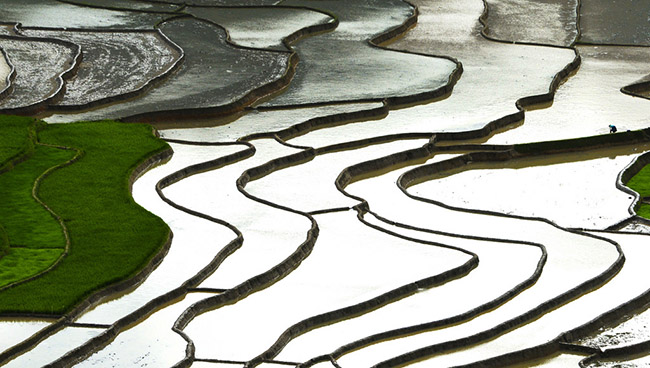 Lên Mù Cang Chải ngắm ruộng bậc thang mùa nước đổ - 8