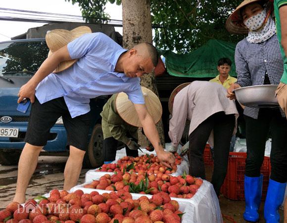 Ảnh, Clip: Khoảng 100 thương nhân Trung Quốc đổ về Lục Ngạn mua vải thiều - 13