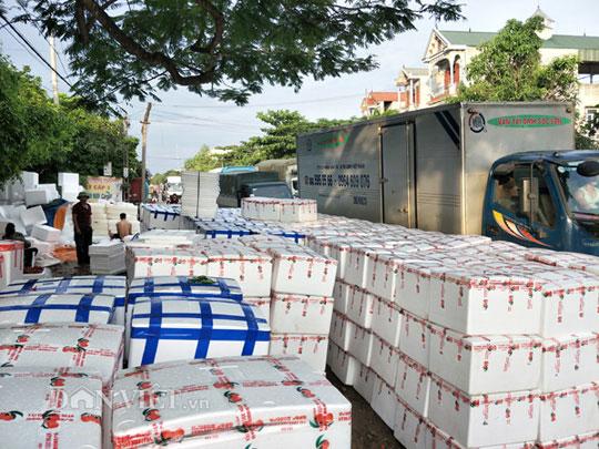 Ảnh, Clip: Khoảng 100 thương nhân Trung Quốc đổ về Lục Ngạn mua vải thiều - 15