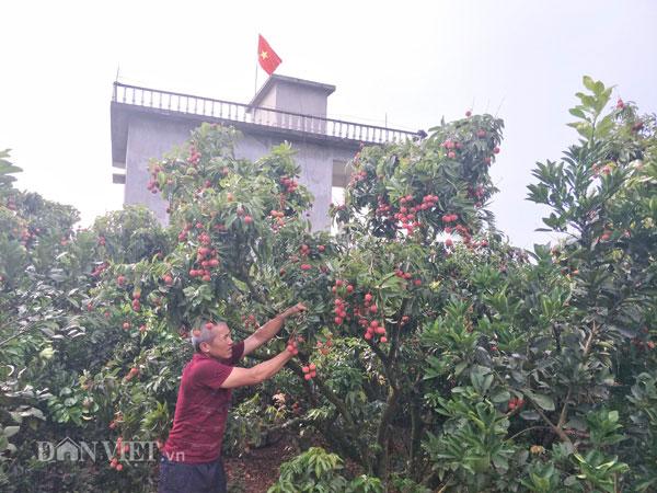 Ảnh, Clip: Khoảng 100 thương nhân Trung Quốc đổ về Lục Ngạn mua vải thiều - 2